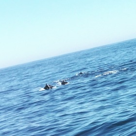 Having the dolphins swim with the boat offshore never gets old!