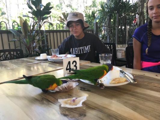 Birds drinking Max's juice