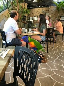 These birds were very friendly during breakfast