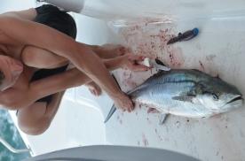 A huge tuna