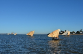 Dhows sailing everywhere