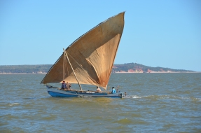 Dhows are everywhere