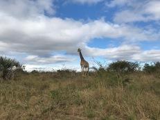More safari scenes