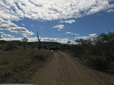 The video of this rhino is better