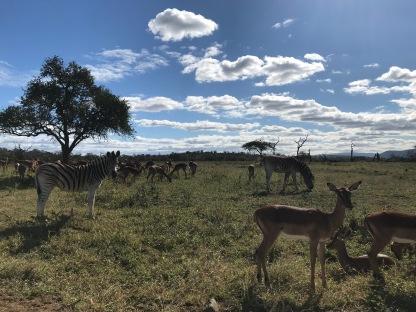 Awesome animals on safari