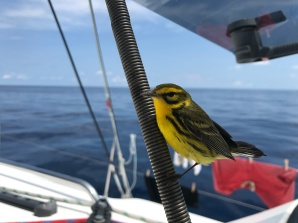 A visitor from out of nowhere during Gulf Stream